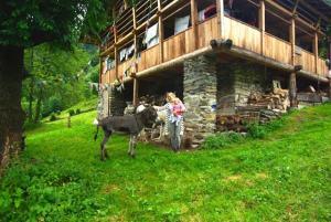 ezels en boerderij