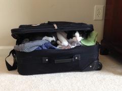 Op vakantie met je kat