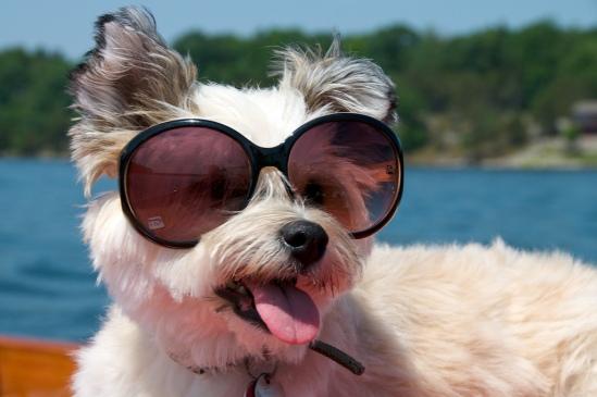 vakantie met hond