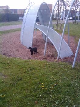 kat in speeltuin