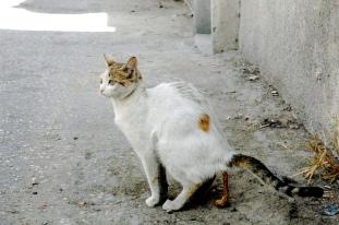 Katten gaan zonder baas op stap en hebben vaak een voorkeur voor de tuin van de buurman
