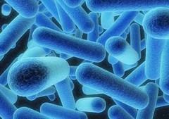 Legionella bacteriën