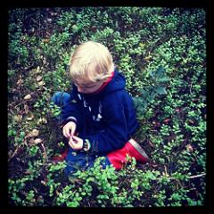 Zorg dat je kind geen ongewassen bosbessen eet