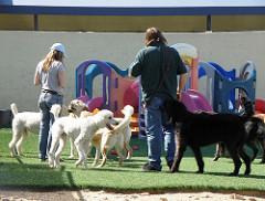 Vaccinatie verplicht bij de hondenschool