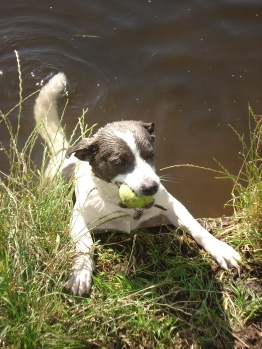 hond in sloot met bal